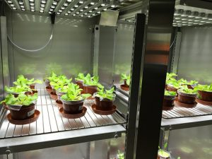 aralab_plant_research_cabinets.jpg